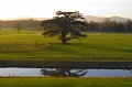 Parkland Management Plans Isle of Wight and Hampshire