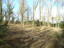 Woodland planting advice Isle of Wight and Hampshire