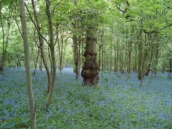 Woodland Management Isle of Wight and Hampshire